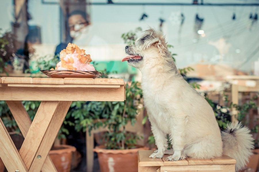 Best Dog Friendly Restaurants in San Diego
