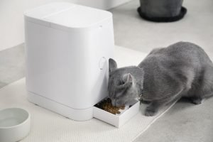 Automatic Cat Feeders For Multiple Cats